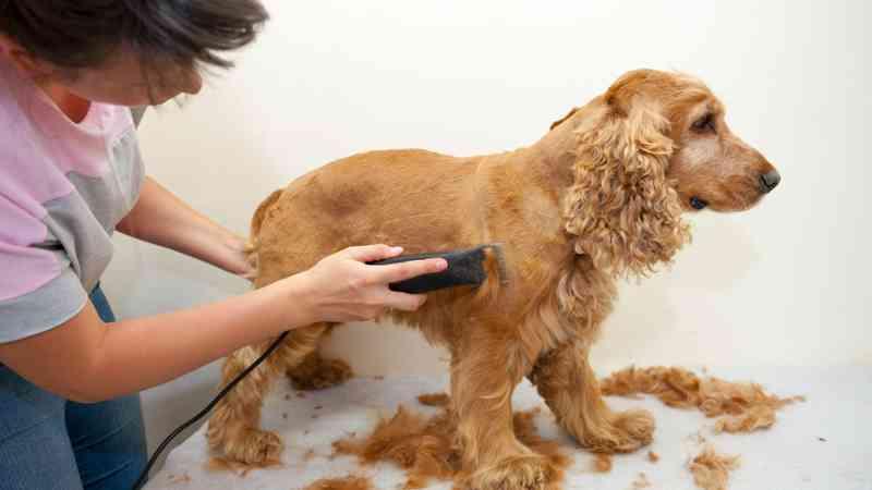 ¿Buscas emprender? Peluquería Canina Podría ser un Lucrativo Negocio